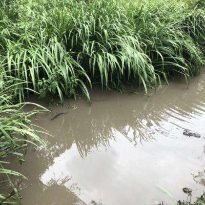 近所の池の保全
